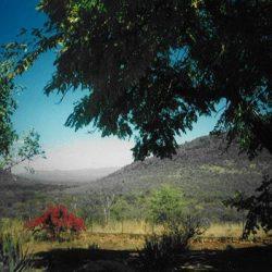 jagtrejser til sydafrika