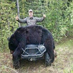 sortbjørn jagt